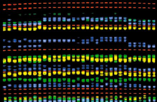 "TBWA\HAKUHODO Launches ""DNA ID"""