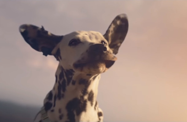 We Can Only Hope to Be as Happy as the Dog Enjoying the Wind in Budweiser's Super Bowl Ad
