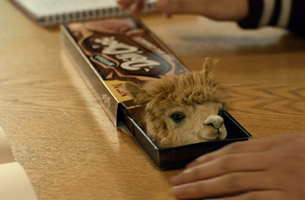 McVitie's Latest 'Sweeet' Campaign Launches… And It Features Alpacas.