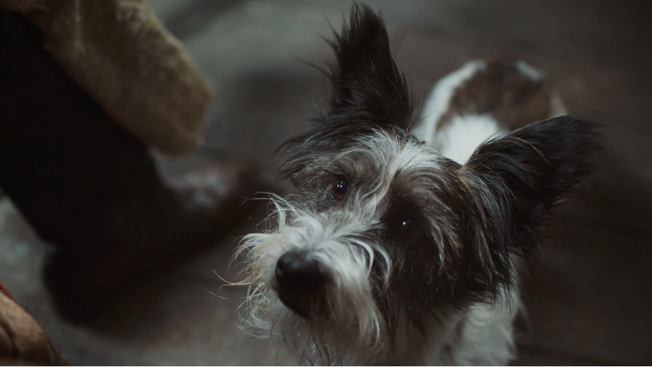 Patient Dog Waits for an Eternity in CESAR's Adorable Campaign