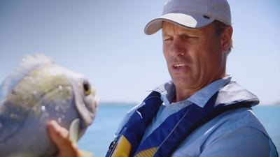 Transport for NSW Delivers Lifejacket Tips Straight From The Fish's Mouth