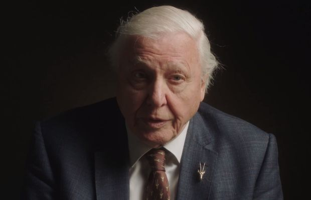How FINCH and David Attenborough Started Giving Back the Lion's Share