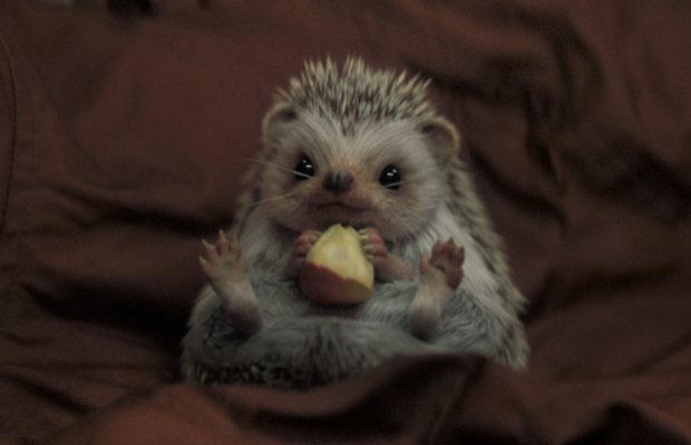Freddie the Adorable Dutch Lottery Hedgehog Wins Gouden Loeki 2019