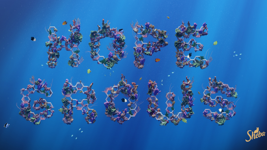 SHEBA Ensures Fish for the Future with World's Largest Coral Restoration Program