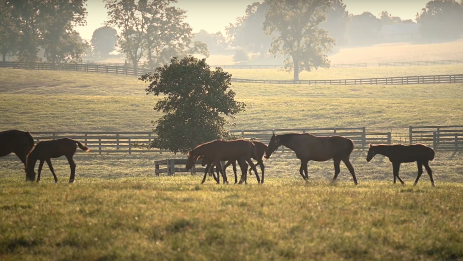 Unplug From Technology and Reconnect with Nature in Soothing 'Lexington is Real Life' Spots