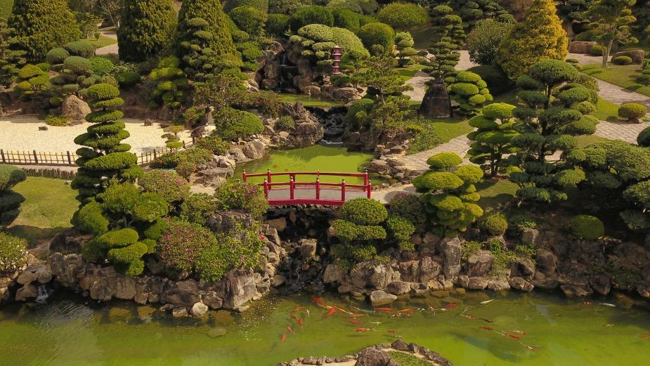Japan... By Way of Brazil