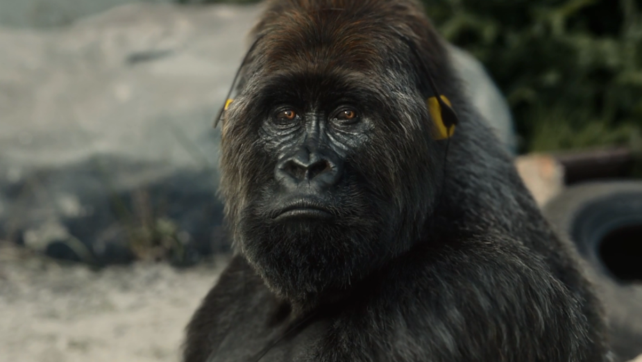 There's No Monkeying around for This Generous Gorilla in FABLEfx's Thought-Provoking Spot for PETA