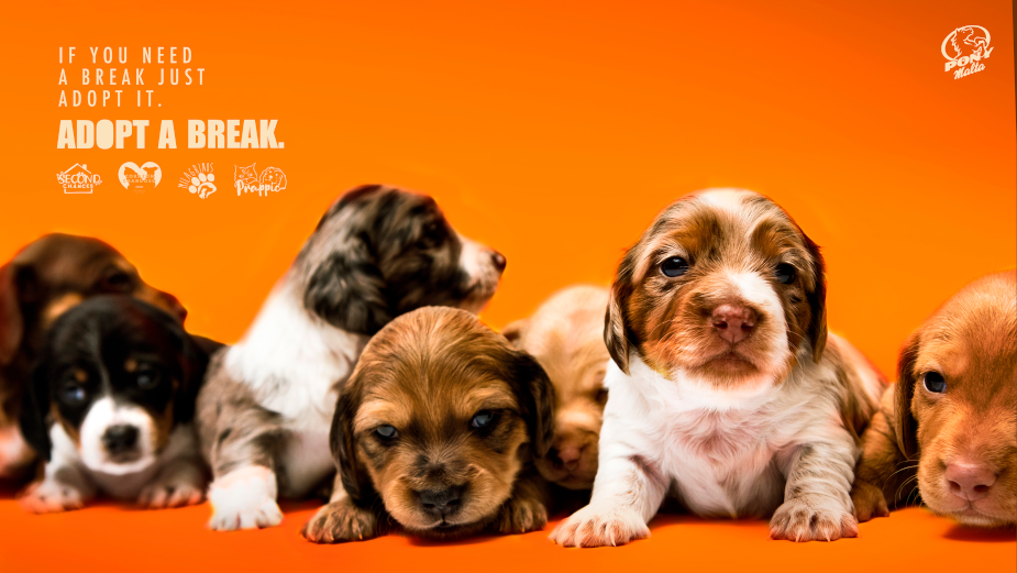 Pony Malta's Comedic Campaign Encourages People to Adopt a Dog and Get the Break They Deserve