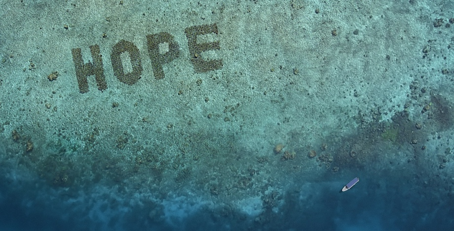 AMV BBDO London Picks Aussie Collective The Glue Society to Help SHEBA Put 'HOPE' on the Map