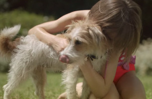 Left Behind Pooch Finds Holidaying Owner in These Intertwining HomeAway Spots