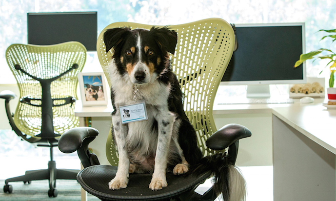Orchard Unveils World's First Canine Naturopath for Blackmores