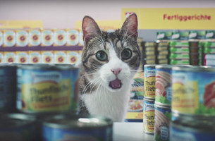 There's a Good Chance You'll Recognise the Kitties in this Supermarket Ad