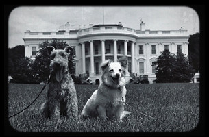 The Amazing Legacy of Strelka, The First Pup to Make it Back from Space