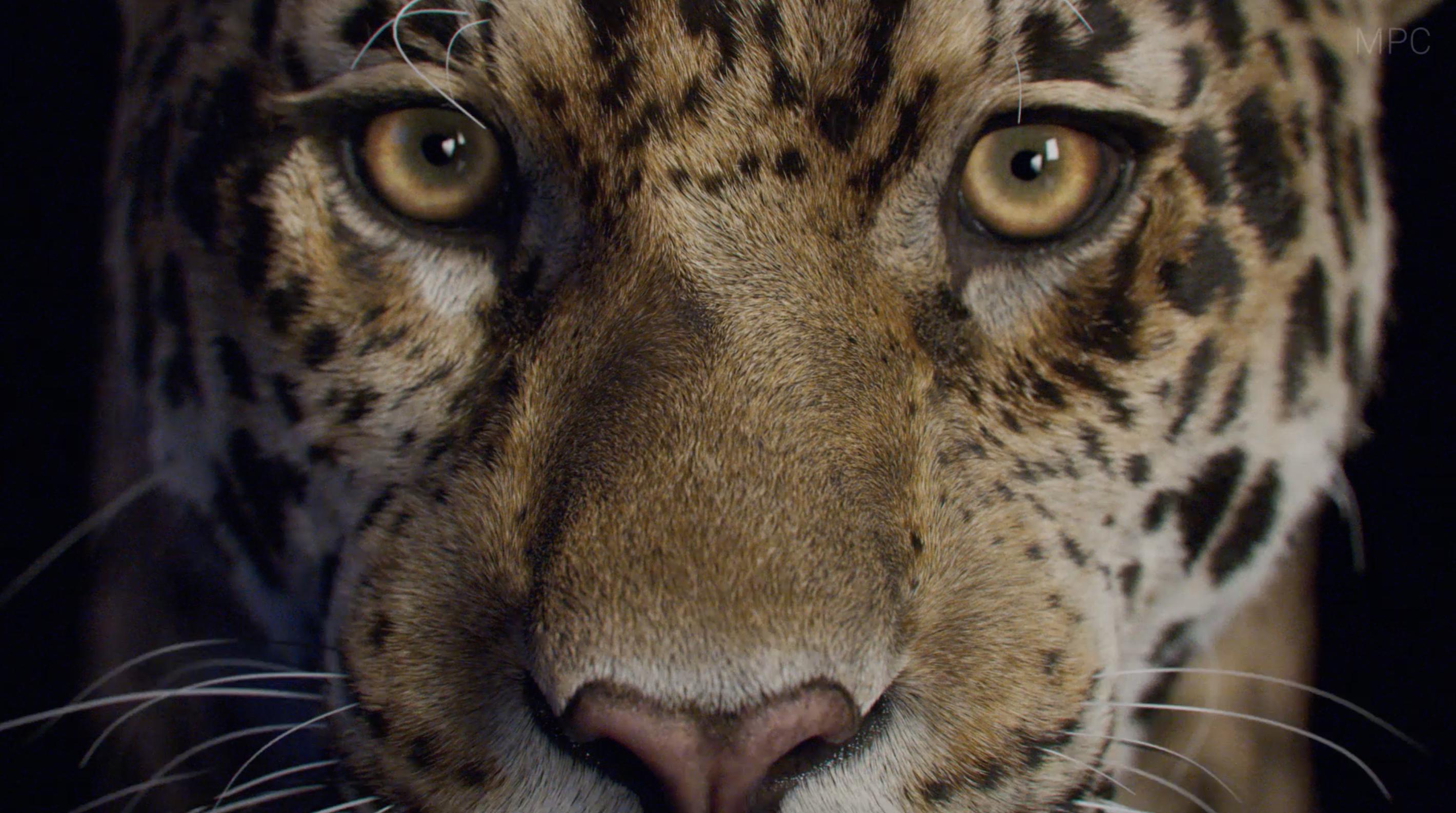 MPC Creates a Bold New Breakdown to Showcase Photo-Real Panthera Onca