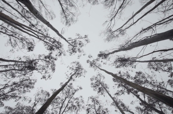 Tiempo BBDO Wants You to Grow Trees from the Ashes of Forest Fires