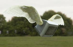 A Flock of 'Televi' Soar in UKTV Spot by The Mill
