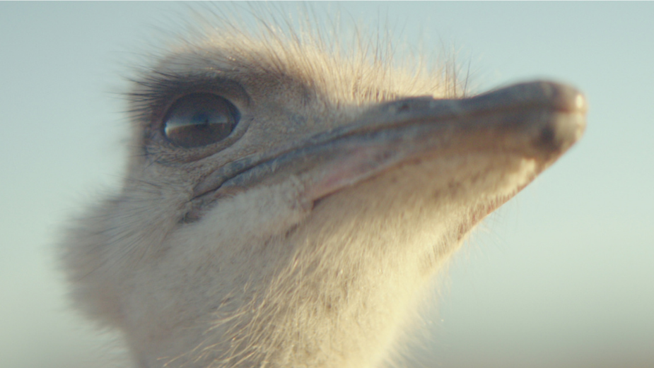 Samsung's Ostrich: How The Most Awarded Character in Advertising Changed Samsung's Fortunes
