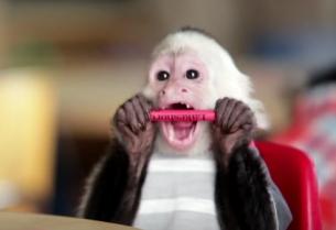 Adorable Little Beasts Are Up to Mischief in New Ziploc Spots