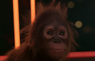 SSE's Orangutan Maya Welcomes an Adorable Addition to the Family