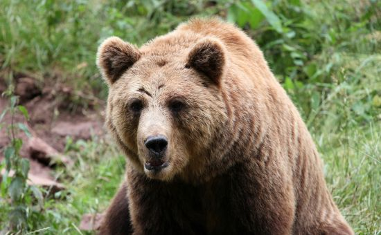 Bears, Woods, and the ANA Production Report
