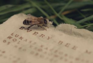 Could This Polish Innovation Save the Bees?