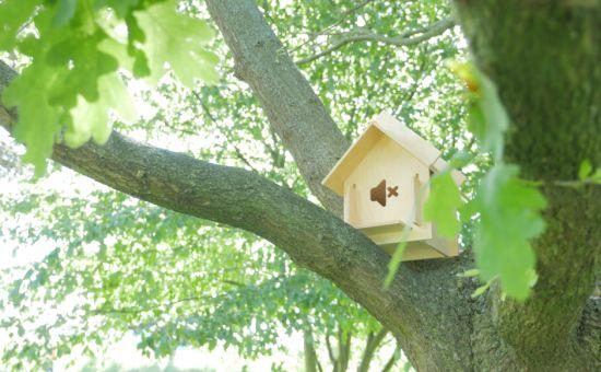 Silence is Golden: Soundproof Birdhouses for Festival Season