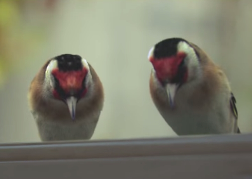 Birds Get the Shaft in iris' Cheeky Domino's Spot
