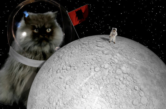 Colonel Meow Makes MovieCat2 Debut