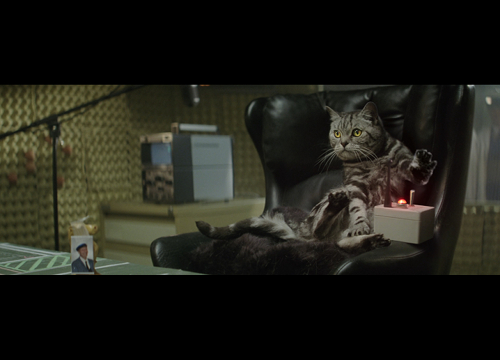 W+K London Bring 'Cats With Thumbs' Back