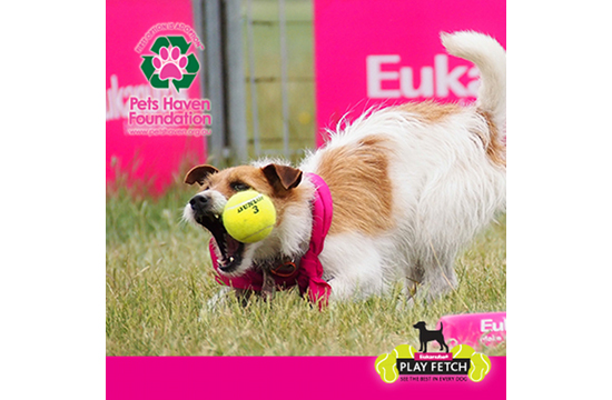 Play Fetch with Eukanuba's Facebook App