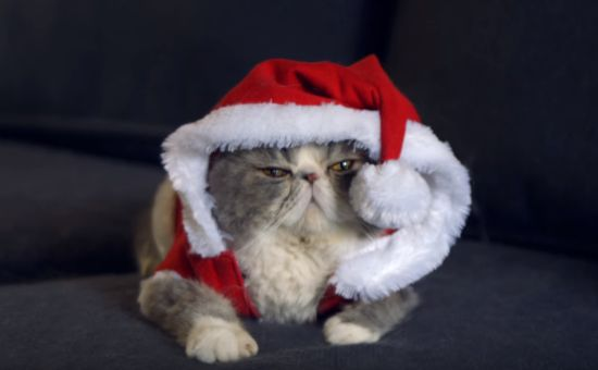 These Cats are Seriously Unimpressed by Christmas