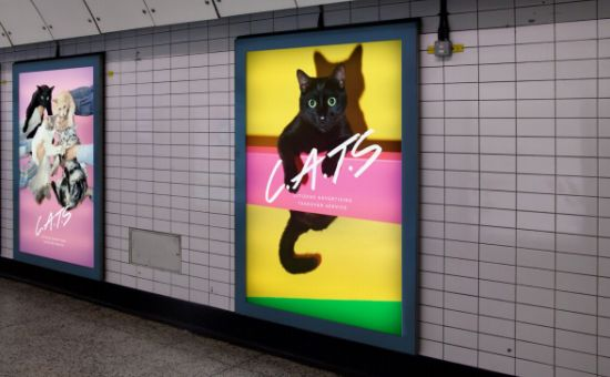 Glimpse Are Trying to Replace Tube Ads with Cat Pics – and They Want You to Help!