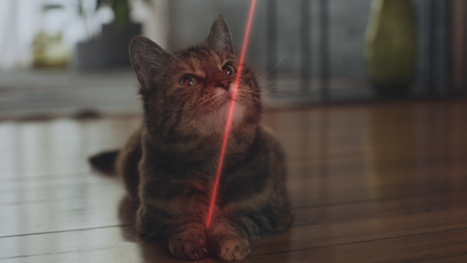 Cat Finally Catches the Laser Pointer in Global Campaign for NUTRO Cat Food