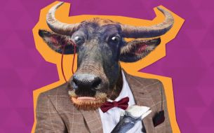 Introducing Clive the Carabao