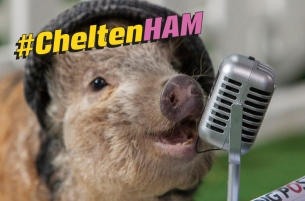 Micro-pigs Bring Home the Bacon for Coral's #CheltenHAM Festival Campaign