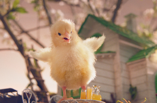 Baby Chick Funks Out in New Asda Spot