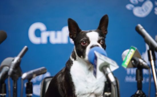 Your Shot: Doggy Divas Perform in Samsung's Crufts Spots