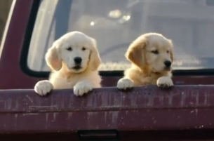 TDA_Boulder's FirstBank Super Bowl Ad has Cute Puppies & Disappointment