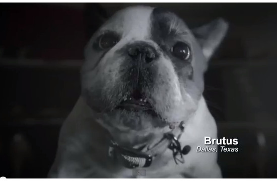 AT&T Digital Life 'Pets Talking'