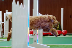 AMV BBDO's Christmas Campaign for CESAR Spreads Holiday Cheer with Sweaters Designed by Dogs