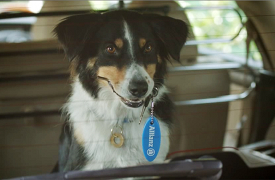 Sawyer The Dog Stars in New Allianz Spot