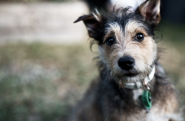 New Zealand's New 'Pet Refuge' Charity Protects Pets While Their Owners Escape Abuse