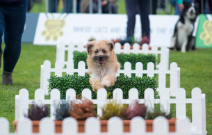 VCCP Kin Barks in the Park with MORE THAN