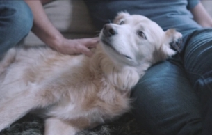 Lovely New Battersea Dogs & Cats Film Champions Our Furry Friends
