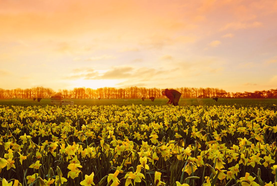 TBWA\London's New Easter Ad for LIDL is All About Daffodils