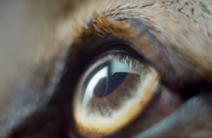 BBDO and PEDIGREE Launch Powerful Video to Mark Blindness Awareness Month