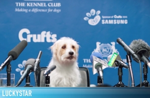 Crufts Dog Show Champions Face the Press in R/GA's Silly Samsung Spot