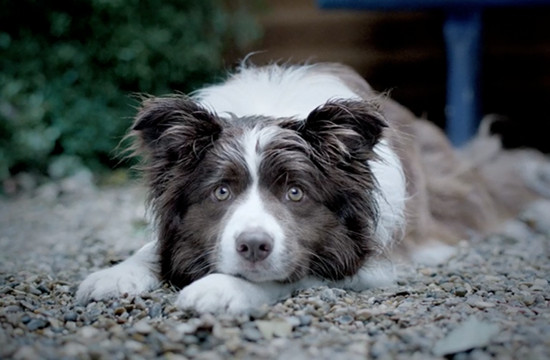 Dogs Trust's New Approach with Dog Days TVC