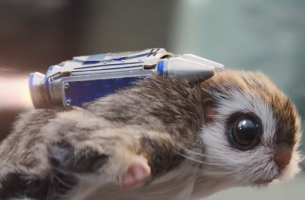 Jet Pack Squirrel Blasts Off for McVitie's New Sweeet Spot