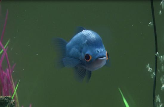Karmarama's Frustrated Fish for Tesco's blinkbox